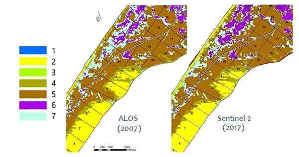 Результаты классификации растительности Куршской косы после объединения классов для снимков Alos и Sentinel; классы: 1 – водные объекты, 2 – песчаные дюны, пляж, 3 – луговая растительность, 4 – псаммофильная растительность, 5 – сосновые леса, 6 – черноольховые леса, 7 – березовые леса