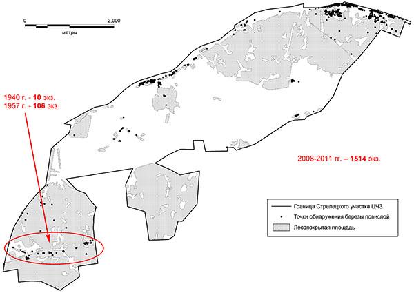 Схема распространения березы повислой на Стрелецком участке Центрально-Черноземного заповедника по материалам картирования 2008-2011 гг.