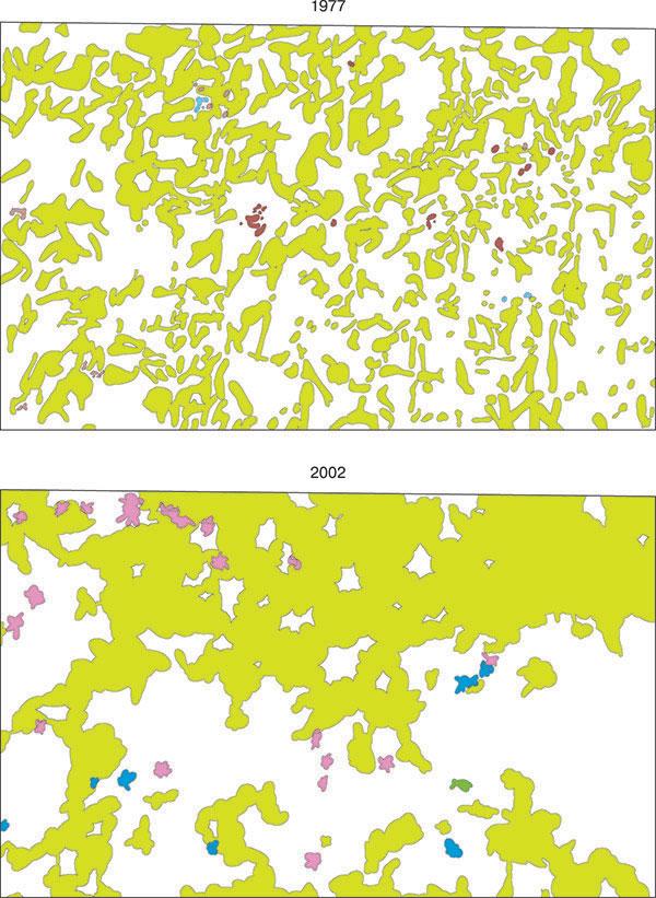 Динамика горизонтальной структуры популяции лещины обыкновенной (Казацкий участок ЦЧЗ, ур. Казацкий лес, лесная ППП № 4)
