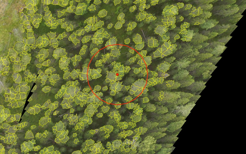 Результат автоматического выделения крон деревьев и граница круговой пробной площади