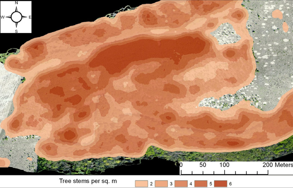 Density of the tree stand formed on the fallow since the termination of its agricultural use, 2005–2017. Based on the materials of multi-temporal UAV surveys