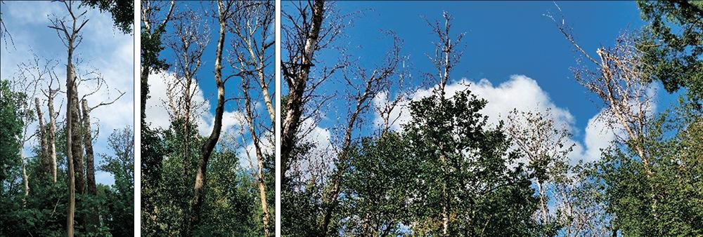 Disintegration of aspen stands on Kazatsky and Streletsky sites of the CCR