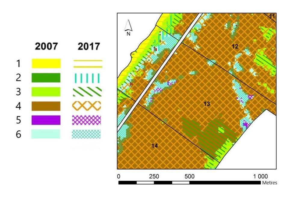 Fragment of the map of the multi-temporal state of vegetation on the territory of the 13th quarter of Zolotye Dyuny forestry. Classes: 1 – sand dunes, beach, 2 – meadow vegetation, 3 – psammophilic vegetation, 4 – pine forests, 5 – black alder forests, 6 – birch forests