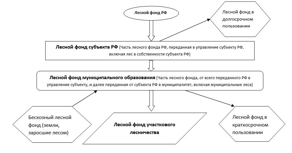 Модель схемы управления лесами